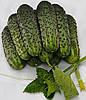 Азарт F1 семена огурца партенокарп. Lucky Seeds 1 000 семян