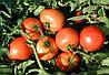 Асвон F1 семена томата дет. Kitano Seeds 10 000 семян