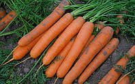 Сатурно F1 семена моркови Нантская Clause 1 000 семян
