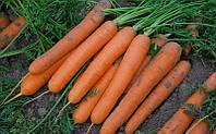 Сатурно F1 семена моркови Нантская Clause 100 000 семян