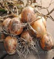 Булат насіння цибулі озимої ріпчастої 260-280 днів  Lucky Seed 1 000 насінин