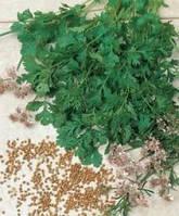 Карибе (Karibe) семена кориандра/кинзы Bejo 500 г