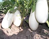 Бібо F1 насіння баклажану Seminis 100 насінин