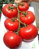 Махитос 73-407 F1 (Mahitos F1) семена томата индет. Rijk Zwaan 1 000 семян