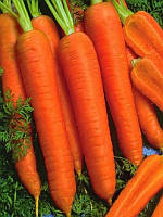 Канада F1 (Kanada F1) 1.8-2.0 мм семена моркови Bejo 1 000 000 семян