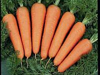 Каскад F1 (Cascade F1) 1.6-1.8 мм. семена моркови Bejo 1 000 000 семян