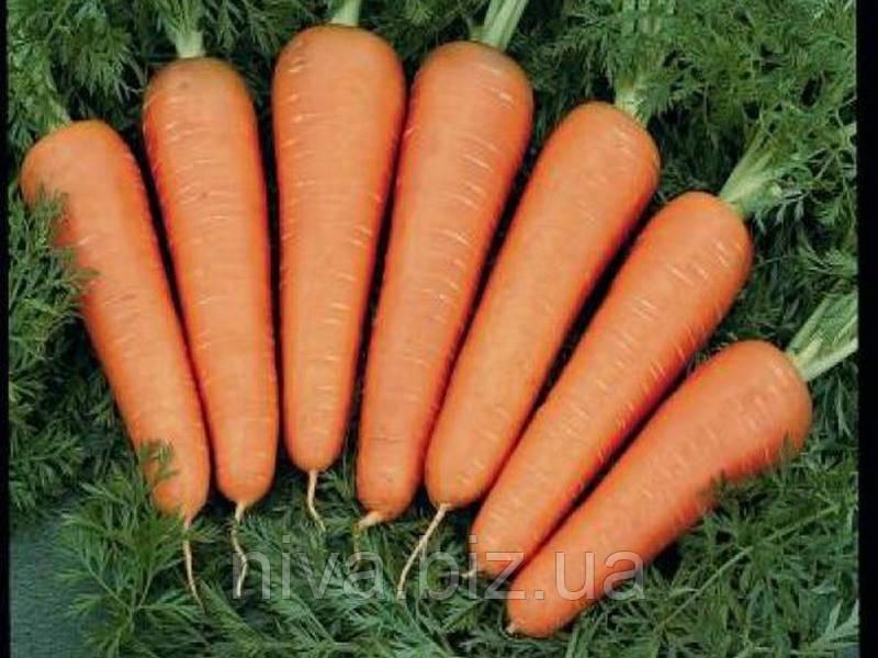 Каскад F1 (Cascade F1) 2.0-2.2 мм семена моркови Bejo 100 000 семян