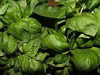 Генуя Стар семена базилика зелёного Agri Saaten 200 г