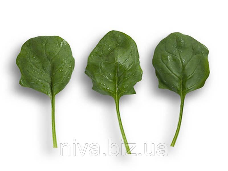 Боа F1 (Boa F1) семена шпината Rijk Zwaan 5 000 семян