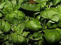 Генуя Стар семена базилика зелёного Agri Saaten 25 г