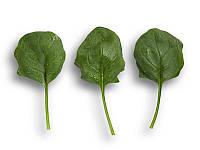Боа F1 (Boa F1) семена шпината Rijk Zwaan 25 000 семян