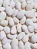 Белая овощная фасоль Euroseed 250 г