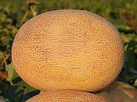 Амал F1 насіння дині Clause 1 000 насінин