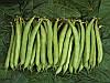 Палома семена фасоли спаржевой Nunhems 100 000 семян