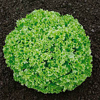 Оникс семена салата Лолло Бионда Nunhems 100 семян
