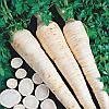Арат Arat семена петрушки корневой Bejo 500 г