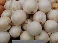 Гледстоун (Gladstonе) насіння цибулі ріпчастої білої Bejo 250 000 насінин