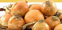 Боско F1 насіння цибулі ріпчастої Syngenta 10 000 насінин
