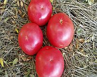 Фенда F1 семена томата индет. розового Clause 25 семян