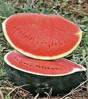 Баронесса F1 насіння кавуна типу Шуга Бебі Rijk Zwaan 1 000 насінин