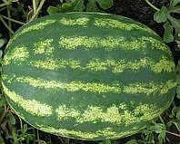 Васко F1 насіння кавуна типу Крімсон Світ Hazera 1 000 насінин