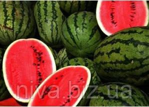 Лєдус F1 насіння кавуна Lark Seeds 1 000 насінин
