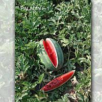 Паладін F1 насіння кавуна Sakata 1 000 насінин