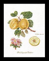 """Набор для вышивки крестом 2057 Яблоки """"Кесвик"""", Keswick Apple  (Теа Гувернер)"""