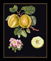 """Набор для вышивки крестом 2057.05 Яблоки """"Кесвик"""", Keswick Apple  (Теа Гувернер)"""