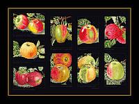 Набор для вышивки крестом 2082.05 Яблоки. Apples  (Теа Гувернер)