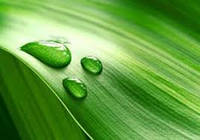 …Як можна в теперішніх умовах не залежати від ціни на сільгосппродукцію?