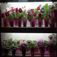 Лампа для растений 36W/77 Fluora
