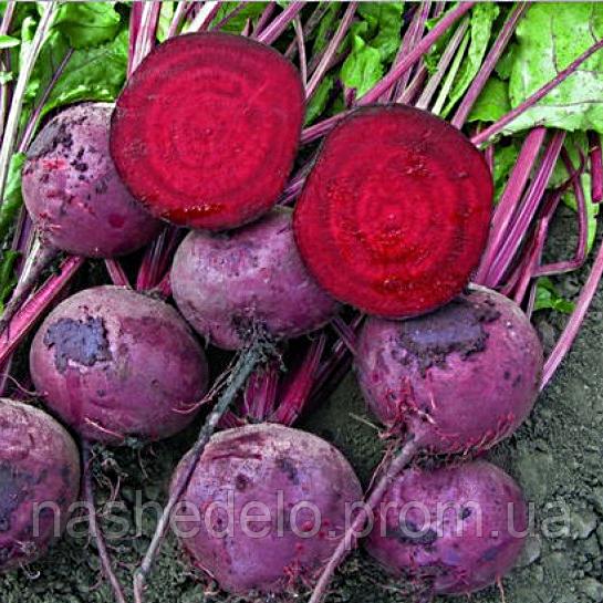 Семена свеклы Зепо F1 25000 сем. калибр 3,50-4,25 прайм. Rijk Zwaan