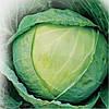 Семена капусты б/к Каменная голова 500 гр. Коуел (Хортус)