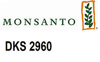 Семена кукурузы Монсанто ДКС 2960 (Dekalb)