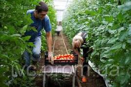 Разнорабочий на ферму, провинция Альберта, Канада (5 вакансий), фото 2