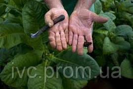 Разнорабочий на ферму, провинция Альберта, Канада (5 вакансий), фото 3