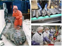 Рабочие на переработку рыбы и морепродуктов в Канаду, провинция Нью Брансвик