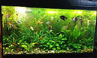 Обслуживание аквариумов в Кривом Роге