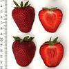 Бениция (Benicia Strawberry) саженцы клубники фриго Бениция