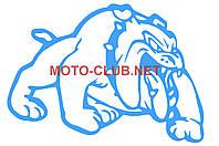 """Наклейка на мототехнику   декор   """"DOG""""   (12x9cм, синяя, правая)_"""