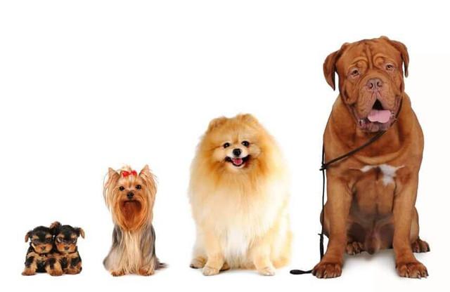 Корм для собак определенных пород