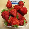 Монтерей (Monterey Strawberry) саженцы клубники фриго Монтерей