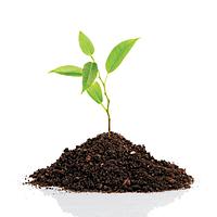 Стимулятори росту рослин