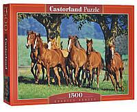Пазли 1500 Castorland