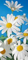 """Бумажные фотообои """"Белые ромашки"""" 96х207 см"""