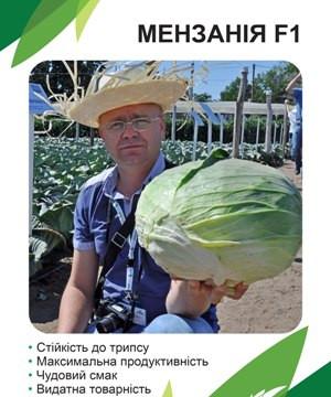 Мензания F1 (Menzania) капуста поздняя, голландия, Seminis (упаковка 2500 семян)