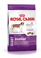 Роял Канин для щенков от 8 до 18/24 мес. (Royal Canin GIANT Junior) 15 кг.