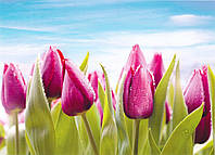 """Бумажные фотообои """"Фиолетовые тюльпаны №11"""" 272х196 см"""