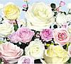 """Бумажные фотообои """"Букет роз №15"""" 294х272 см"""